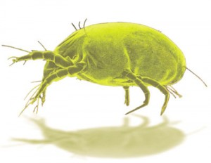 Invisible DUST MITES Fill the Air Millions of these microscopic nasty creatures and their waste are present in a single ounce of dust. They raise havoc with your breathing and cause damage to your health. Unfortunately, they are found in every home and office!